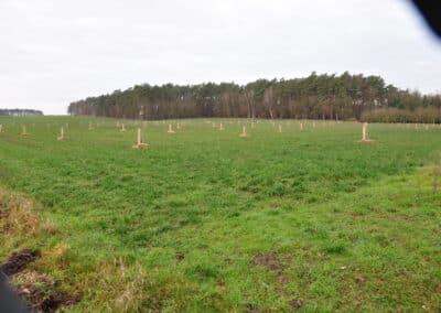 Walnussplantage angelegt